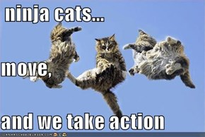 ninja cats... move, and we take action