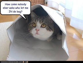 How come nobody eber asks who let me IN de bag?