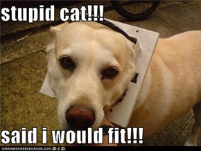 stupid cat!!!  said i would fit!!!