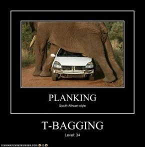 T-BAGGING