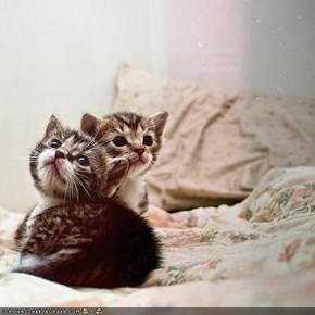 Cyoot Kittehs of teh Day: Les Enfants Terribles