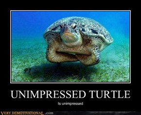 UNIMPRESSED TURTLE