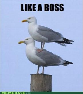 Like a Seagull