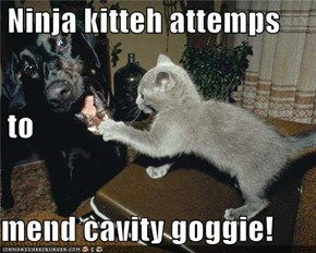 Ninja kitteh attemps  to mend cavity goggie!