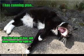 I has cunning plan...