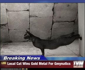 Breaking News - Local Cat Wins Gold Metal For Gmynatics