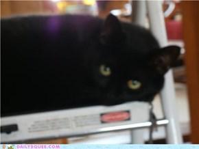 Cat-Sized