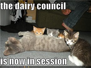 the dairy council  is now in session