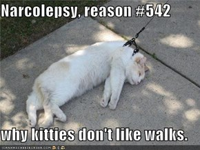 Narcolepsy, reason #542  why kitties don't like walks.