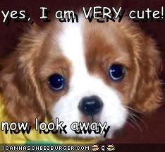 yes, I am VERY cute!  now look away