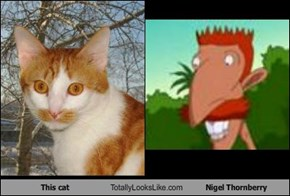 This Cat Totally Looks Like Nigel Thornberry
