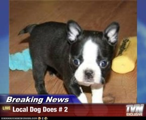Breaking News - Local Dog Does # 2