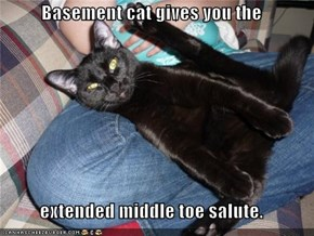 Basement cat gives you the  extended middle toe salute.