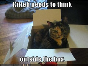 Kitteh needs to think   outside the box.