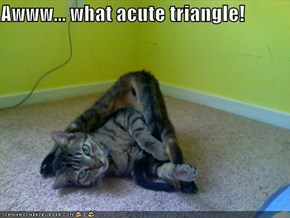 Awww... what acute triangle!