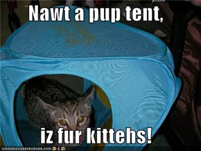 Nawt a pup tent,  iz fur kittehs!