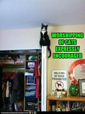 WORSHIPPING OF CATS