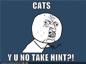 CATS  Y U NO TAKE HINT?!