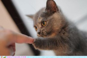 CUTEST. FIST BUMP. EVER.