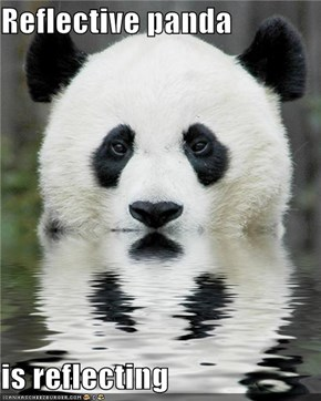 Reflective panda  is reflecting