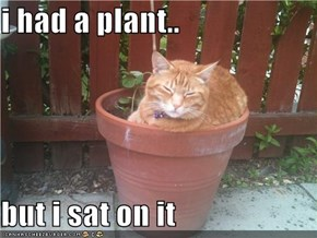 i had a plant..  but i sat on it