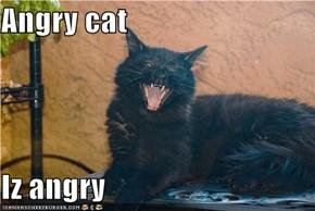 Angry cat  Iz angry