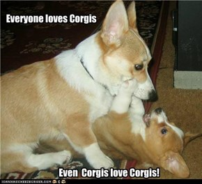 Corgis for everyone!