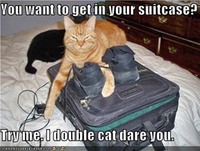 You want to get in your suitcase?  Try me. I double cat dare you.
