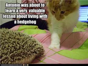 Antonio was about to learn a very  valuable lesson about living with a hedgehog