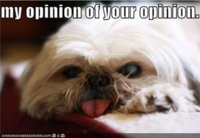 your opinion.