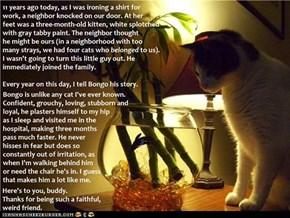 Happy Anniversary, Bongo