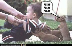 PUSH! PUSH! PUSH!