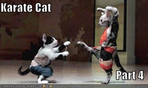 Karate Cat  Part 4