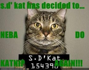 s.d' kat has decided to...  NEBA                                   DO                  KATNIP                  AGAIN!!!