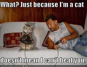 What? Just because I'm a cat  doesn't mean I can't beat you.