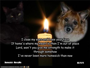 A Monday Night Candle For All Our Furbabies At The Bridge, And For Those In Need Here On Earth