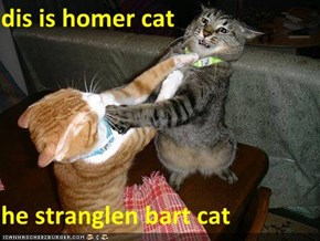 dis is homer cat  he stranglen bart cat