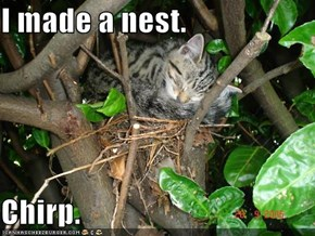 I made a nest.  Chirp.