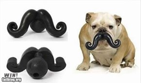 Dog 'Stache WIN