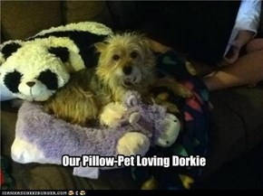 Our Pillow-Pet Loving Dorkie