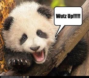 Wutz Up!!!!!