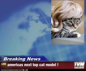 Breaking News - americas next top cat model !