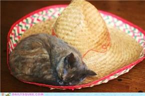 Sombrero pequeño lindo