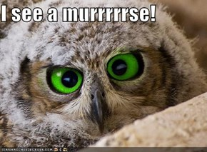 I see a murrrrrse!