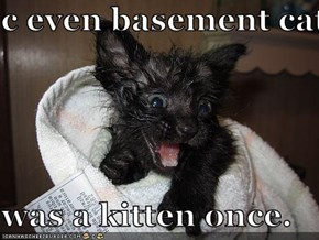 c even basement cat  was a kitten once.