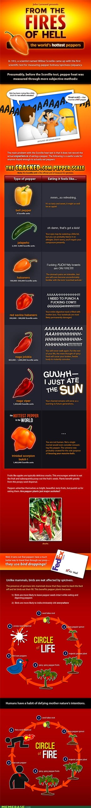 The world's hottest peppers