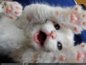 Cyoot Kitteh of teh Day: SPRIZE!!!