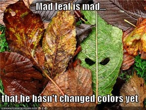 Mad leaf is mad...  that he hasn't changed colors yet