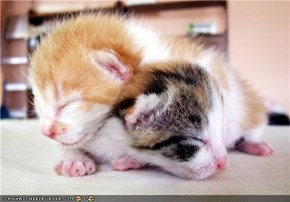 Cyoot Kittehs of teh Day: Stackable Sweethearts