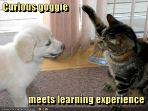 Curious goggie                  meets learning experience